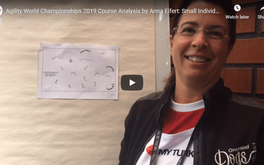AWC 2019 Course Analysis: Small Individual Jumping