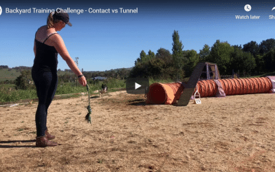 Backyard Training Challenge – Contact vs Tunnel