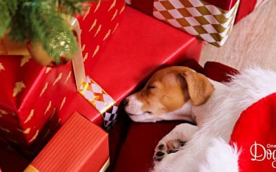 Christmas  Survival Guide for First-Time Puppy-Parents