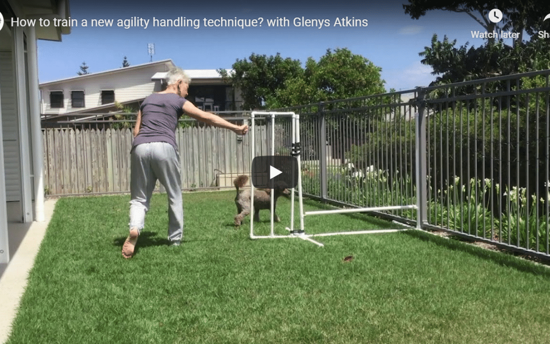 More tips for training new agility handling techniques