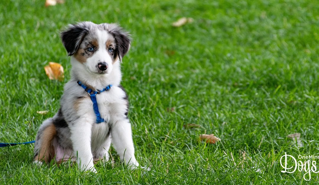 Get Ready for a Cuteness Overload – National Puppy Day is Coming!
