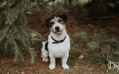 How to stop a puppy from barking excessively?