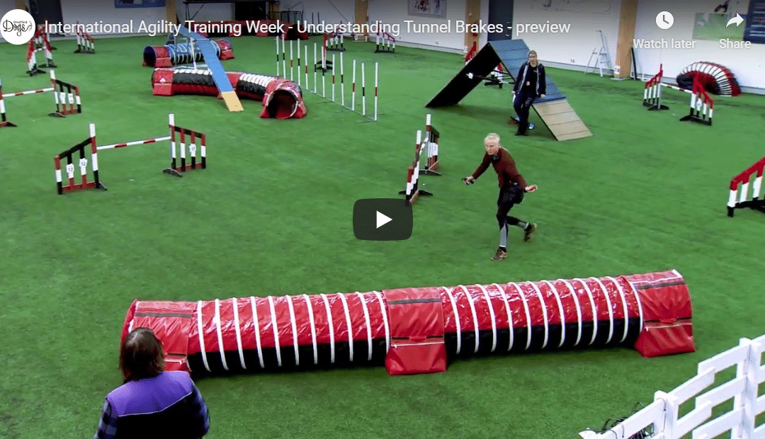 International Training Week is great training for advanced agility teams!