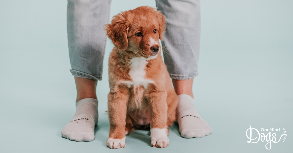 Understanding your dog's point of view makes you the best dog owner