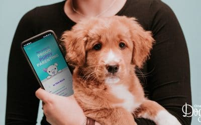 Why Online Training Works So Well With Puppies