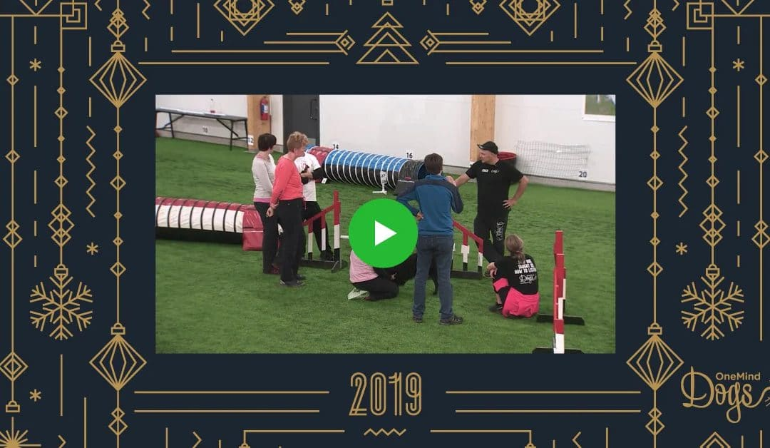 OneMind Dogs Community's Favorite Agility Videos of 2019