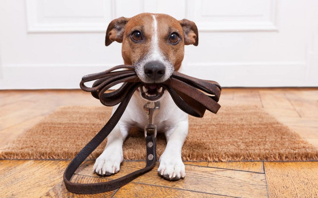 Stuck at home — how to keep your dog happy & active?