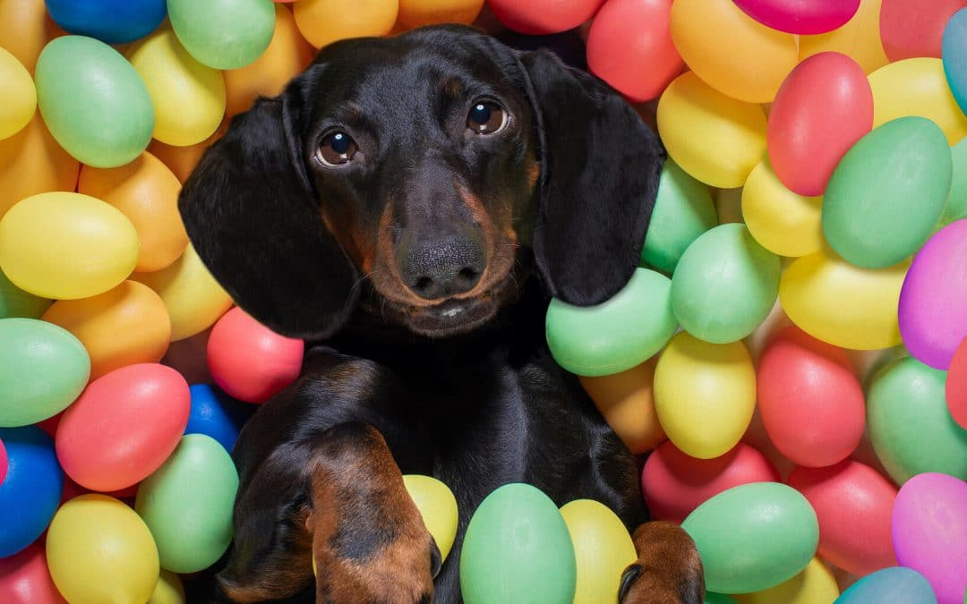 How to create the best puppy-friendly Easter egg hunt