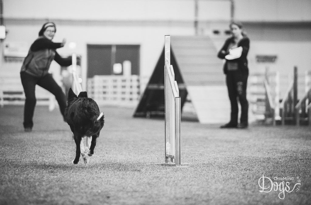 Four new agility foundation lessons for distance handling