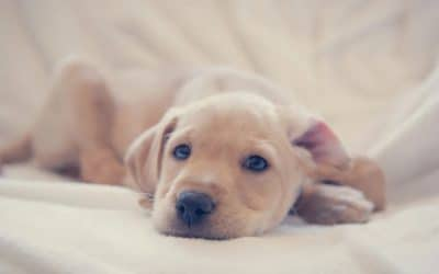 Puppy separation anxiety: what it is and how to prevent it
