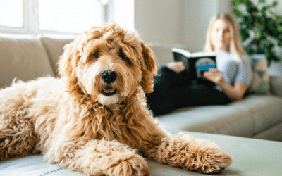 5 easy ways to socialize your puppy during social distancing
