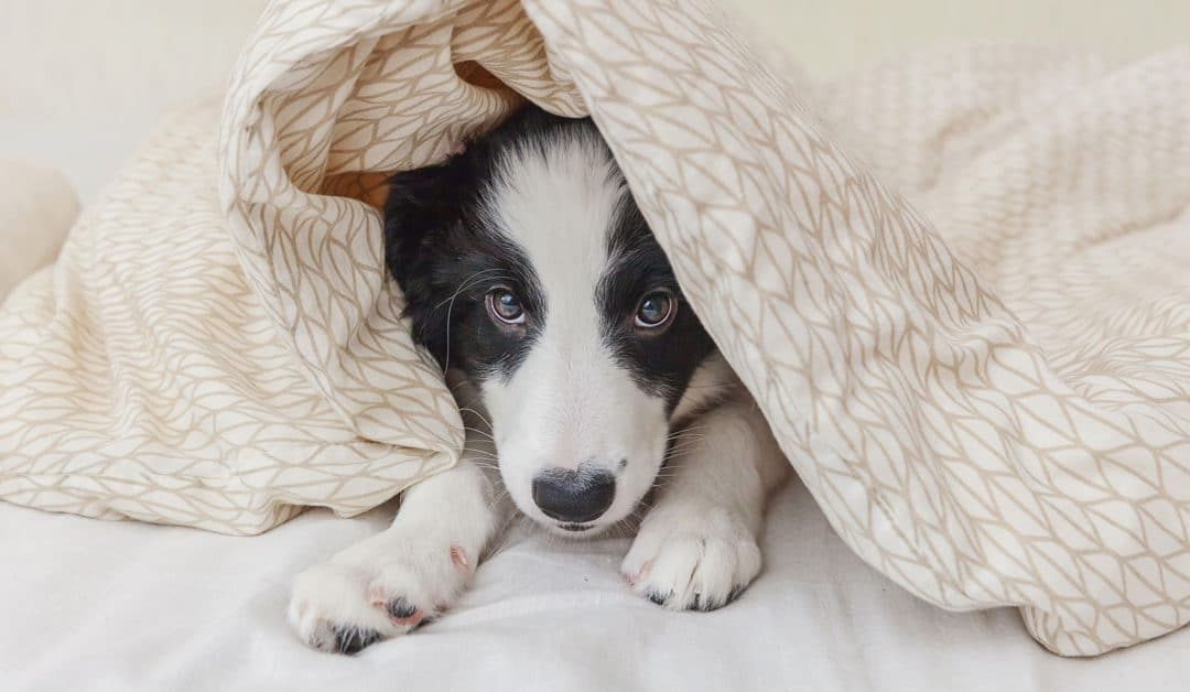 Puppy separation anxiety: 5 popular FAQs answered