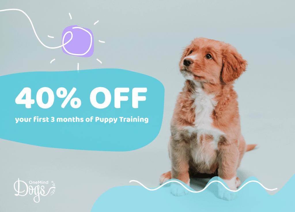 Summer puppy training