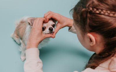 Children training puppies – what you need to consider