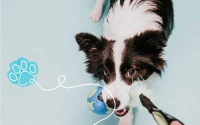 How to DIY easy and safe puppy toys at home