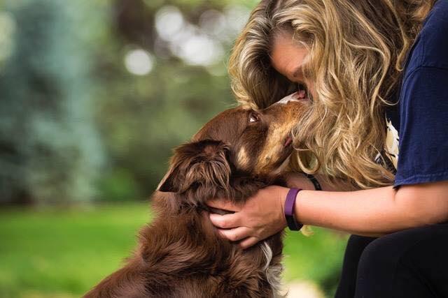 blissful dog photo
