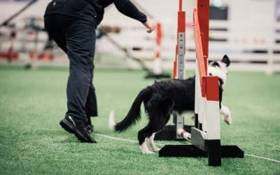 Foundations are the key to a successful agility career