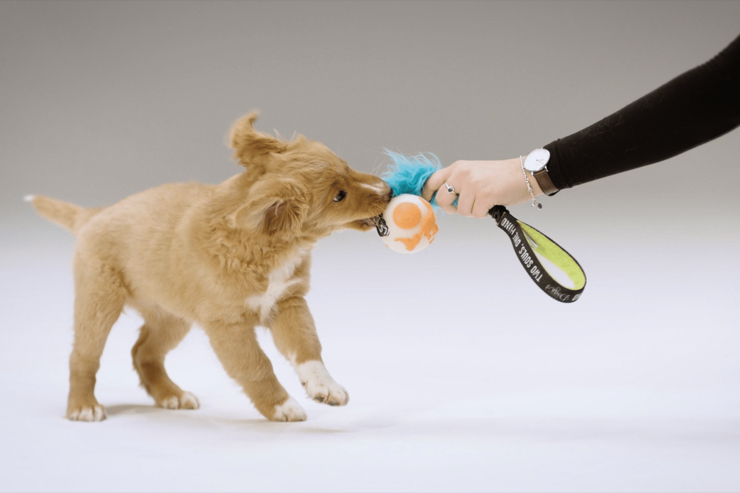 puppy tug game