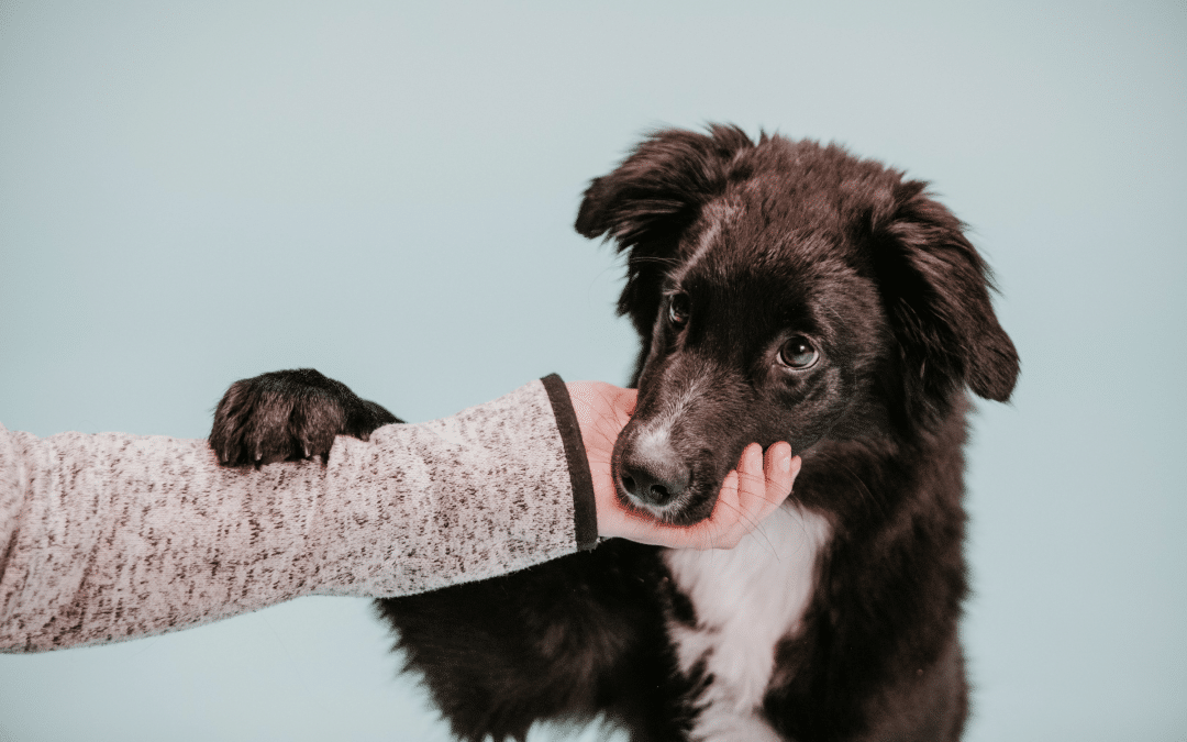 5 places to find support for puppy training