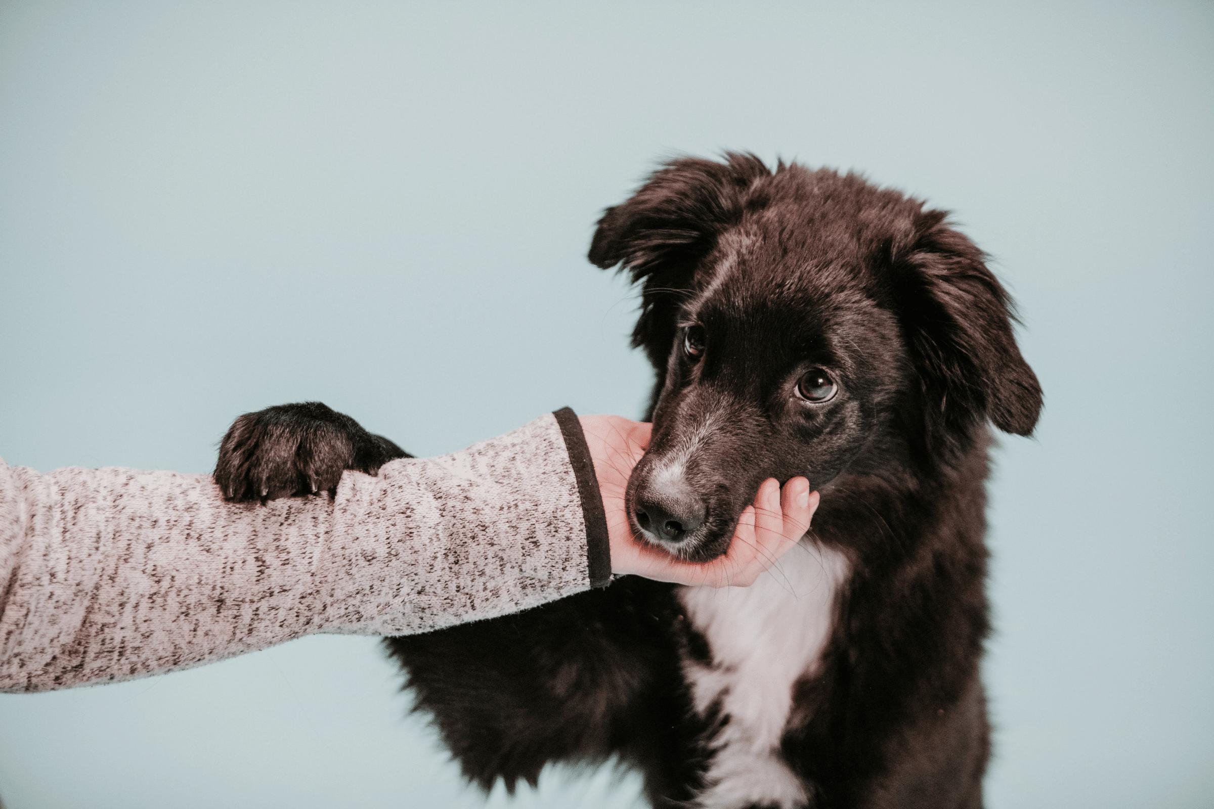 puppy training support