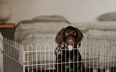 10 handy tips for puppy proofing your home