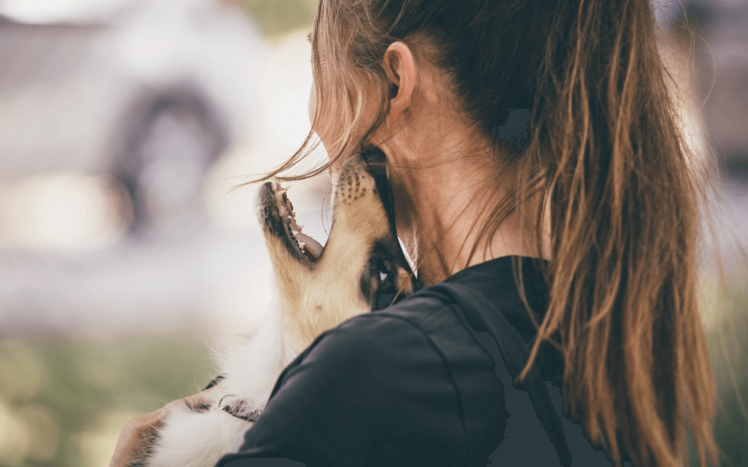 Why puppies bite — and how to teach them to stop it