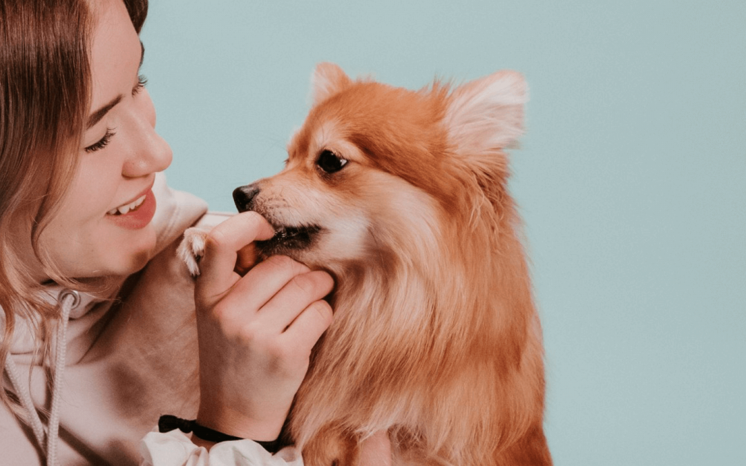 The puppy teething stage: what to know about your pup's dental health