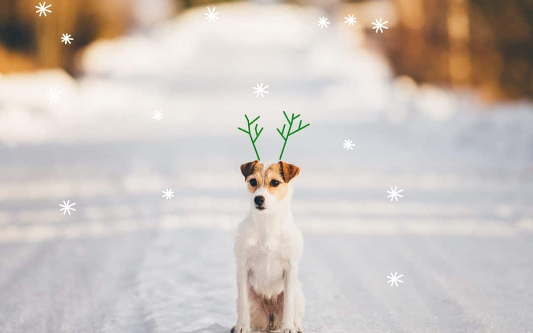 Your ultimate guide to a dog-friendly holiday season
