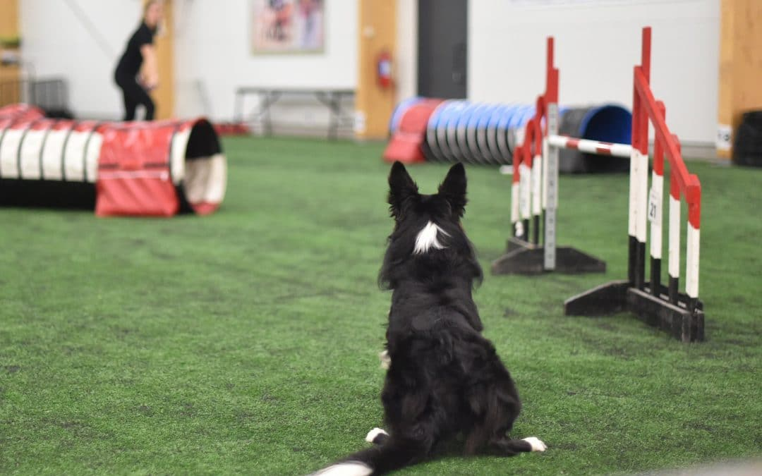 Distance handling — the most versatile tool in your agility toolbox