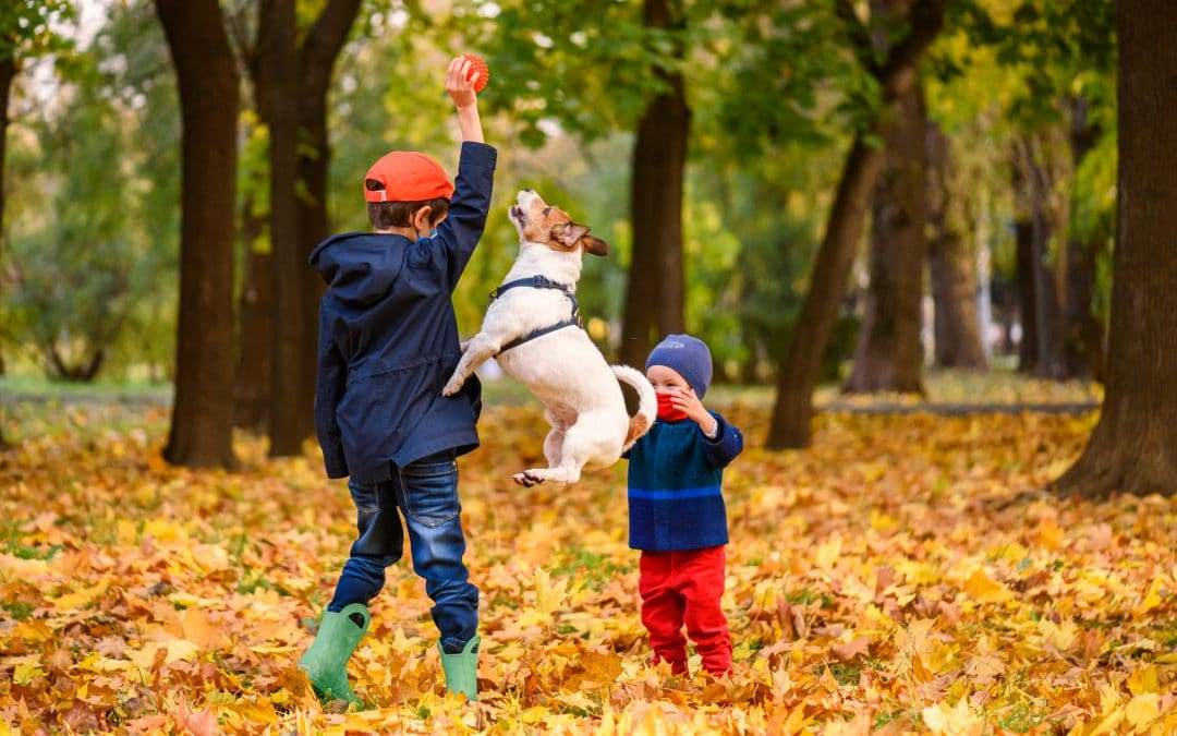 4 ways to get the whole family involved in dog training