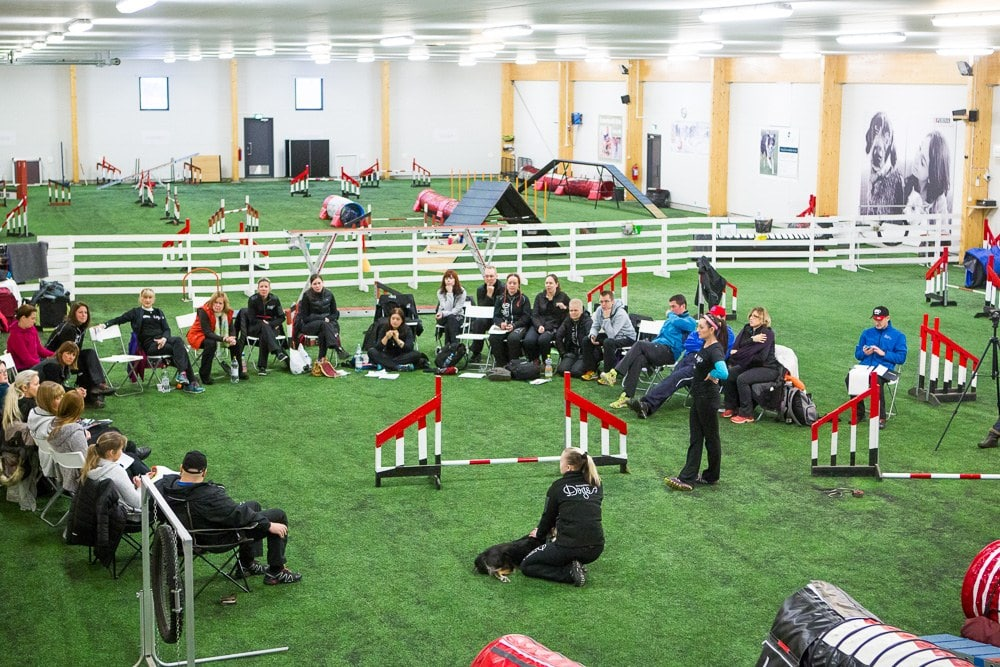 Dog agility training — Online vs. in-person